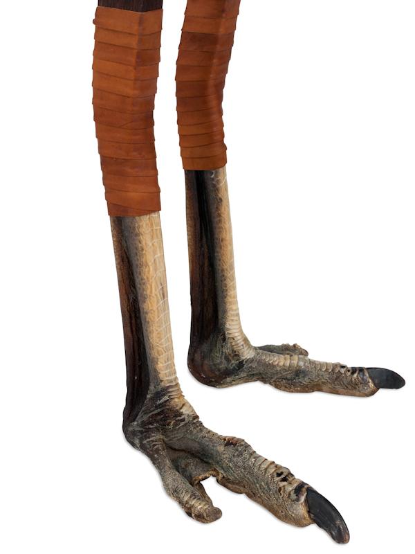 struisvogel poten